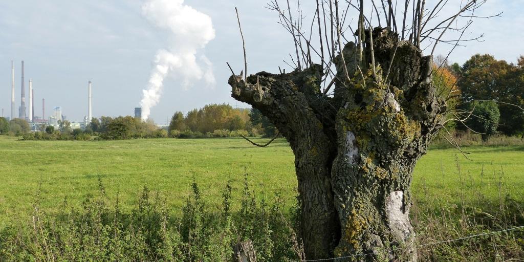 Roland Van Der Meer Sustainability–2